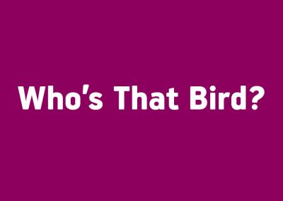 Who's That Bird?